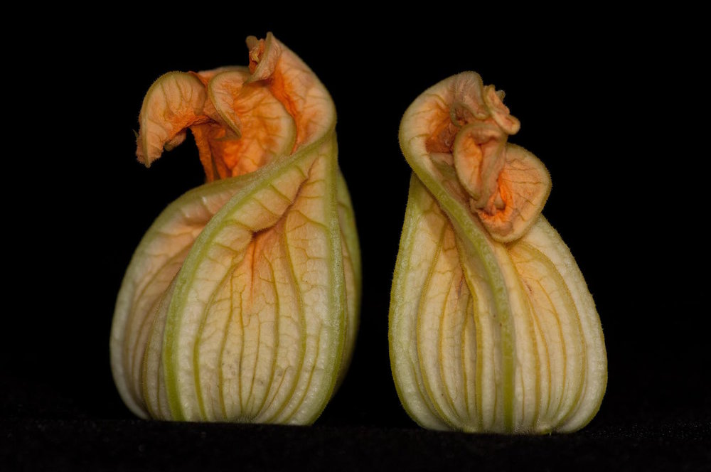 """Squash Blossoms"", photography, 16"" x 20"", $225 (framed)"