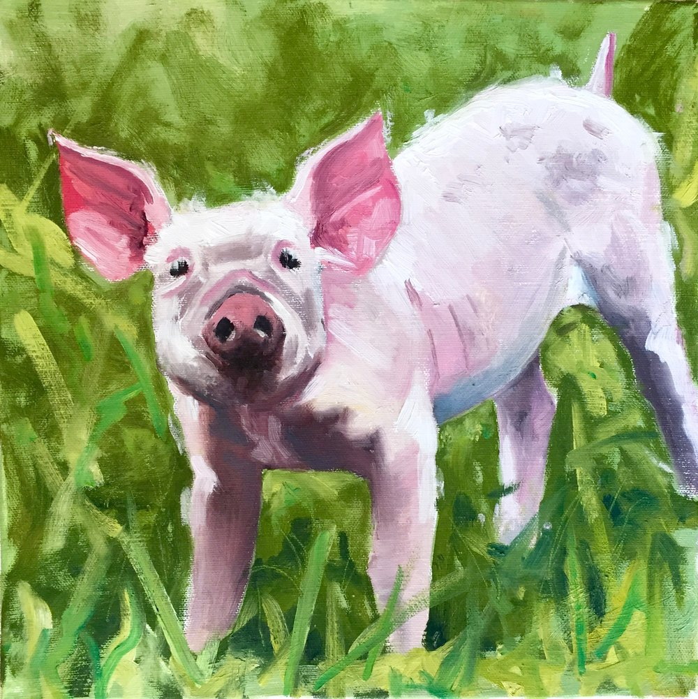 """Pig In The Grass"", oil on canvas, 12"" x 12"", $475 (framed)"