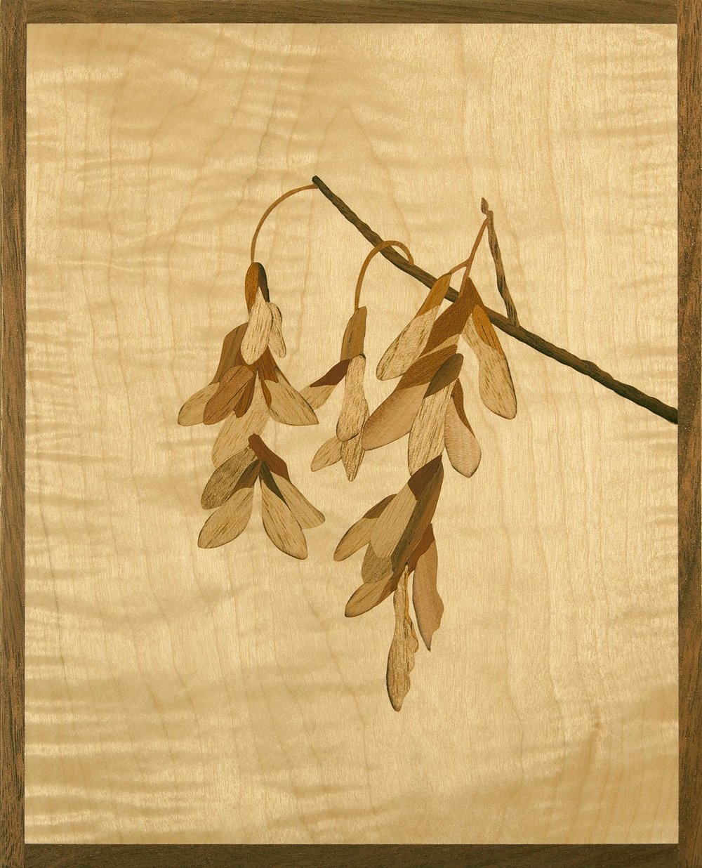 """""""Aging Gracefully"""", (Maple Seedpods In Winter), marquetry, 6.5"""" x 8"""", $625"""