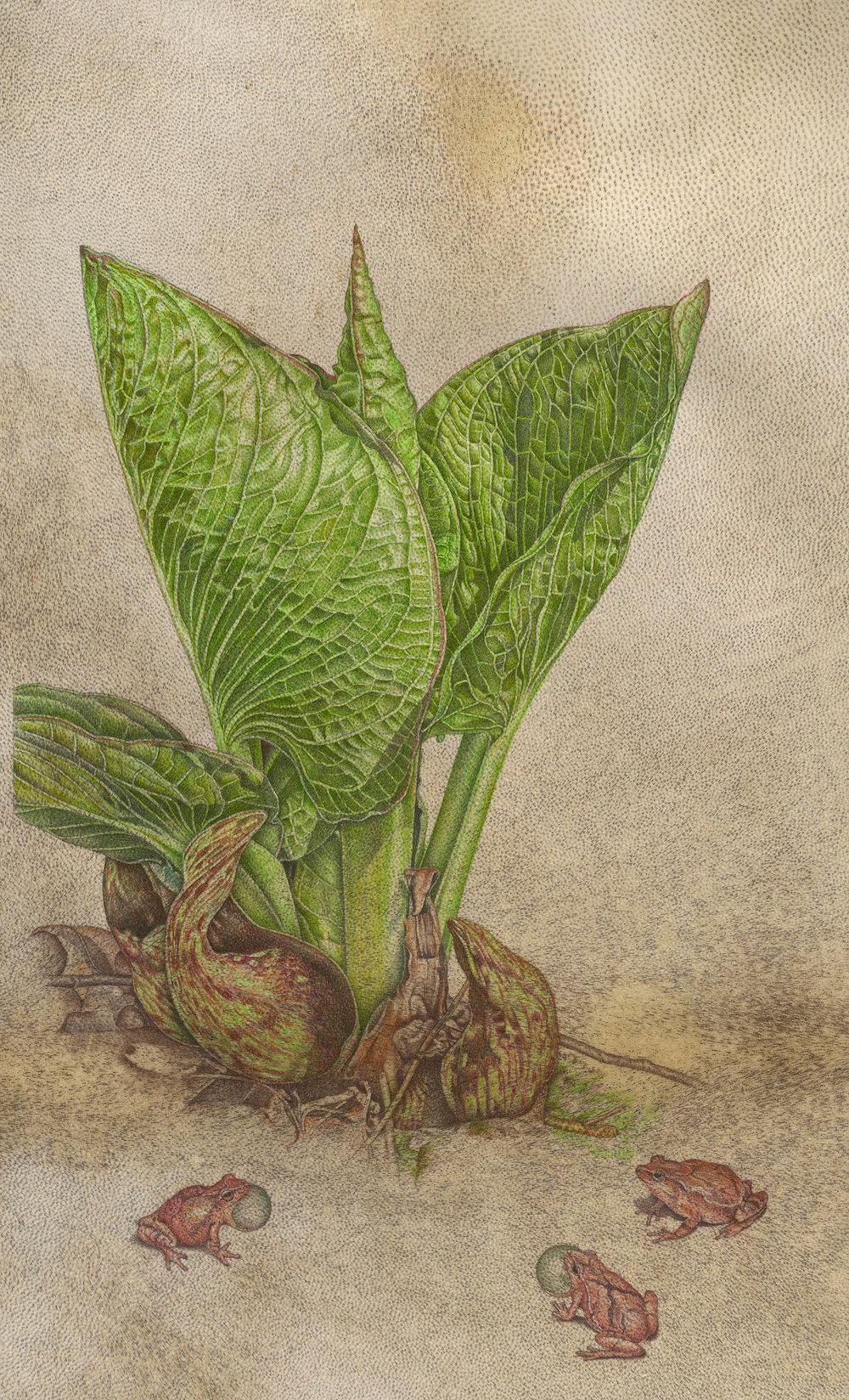 """Skunk Cabbage"", watercolor on goatskin, 16 3/4"" x 9 1/2"" (image size), $2,400 (framed)"