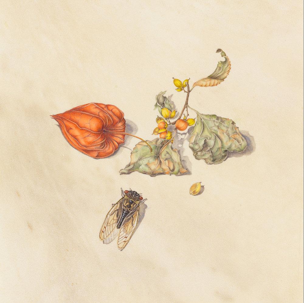 """Chinese Lantern"", watercolor on deerskin, 7 1/4"" x 7 1/4"", (image size), $750 (unframed)"