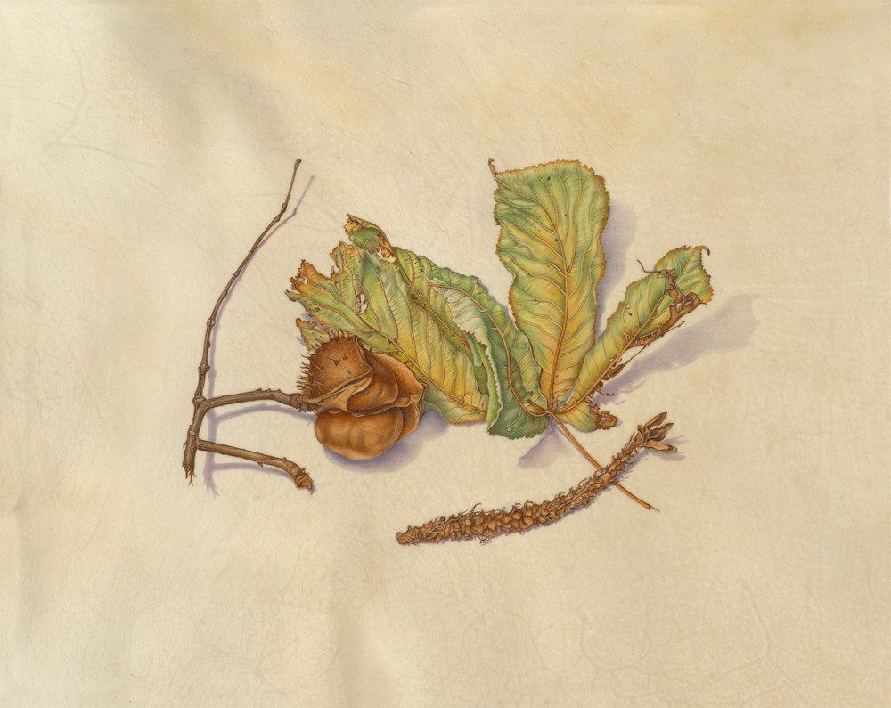 """""""Horse Chestnut in November"""", watercolor on calfskin, $1,200 (unframed)"""