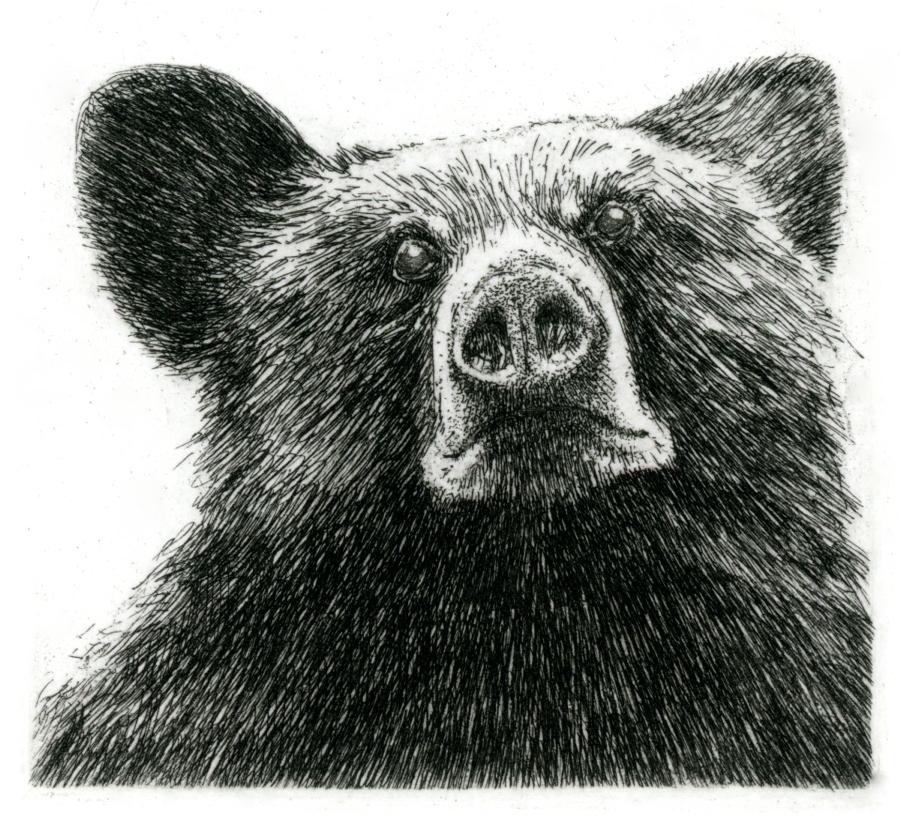 """'Black Bear', 10""""x8"""", $120 framed, $65 unframed"""
