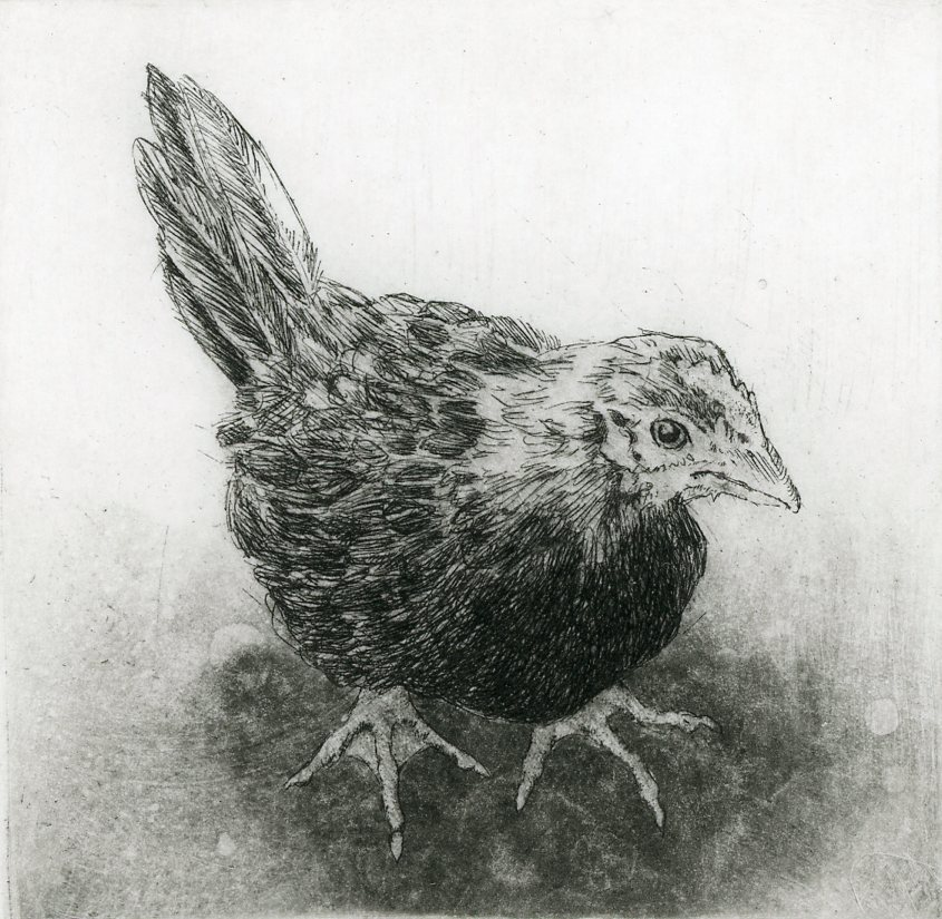 "'Young Rooster', 10""x8"", $120 framed, $65 unframed"