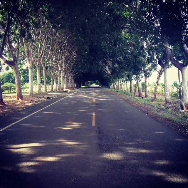 Camino a La Enea, Guararé, Los Santos, Panamá.