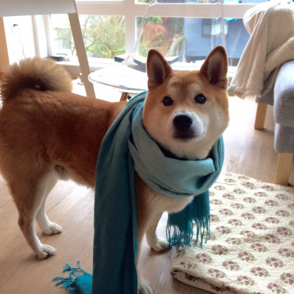 Heather's doge Shoji brings you such style for your New Year!