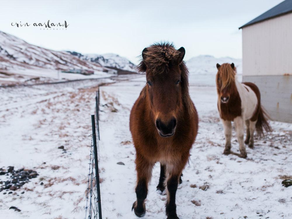 EAasland Iceland blog 5.jpg
