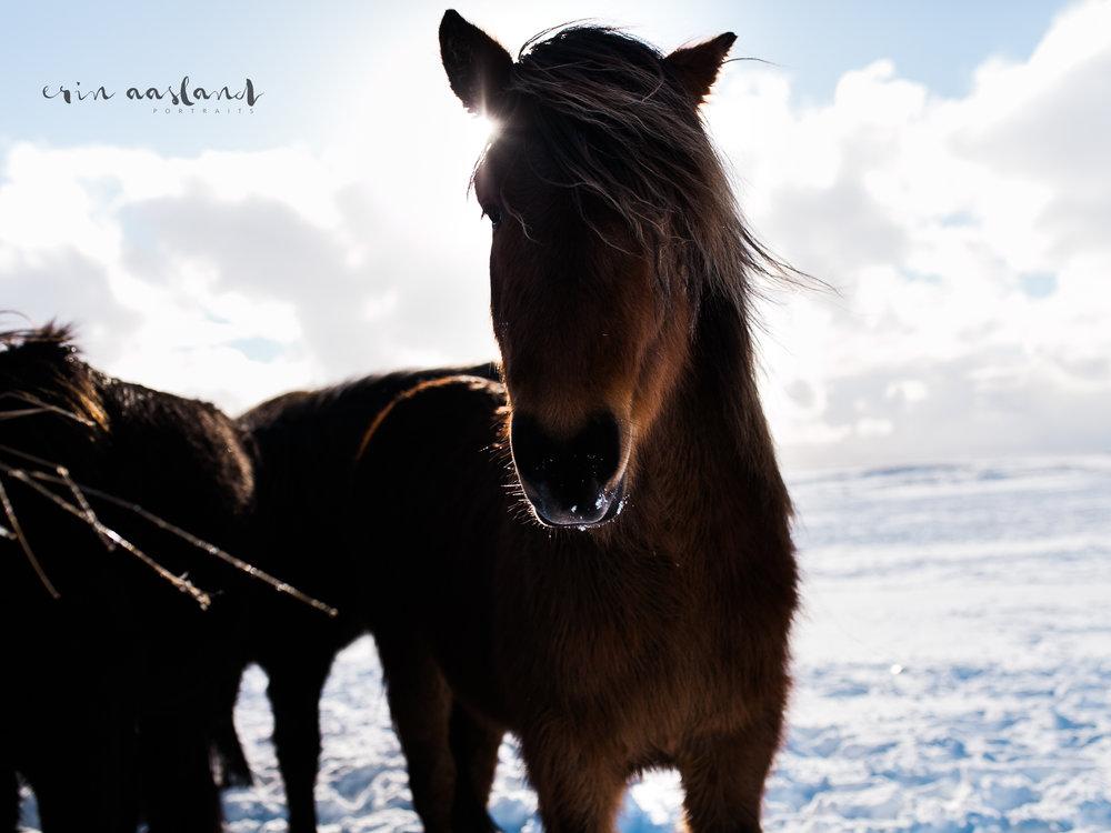 EAasland Iceland blog 21.jpg