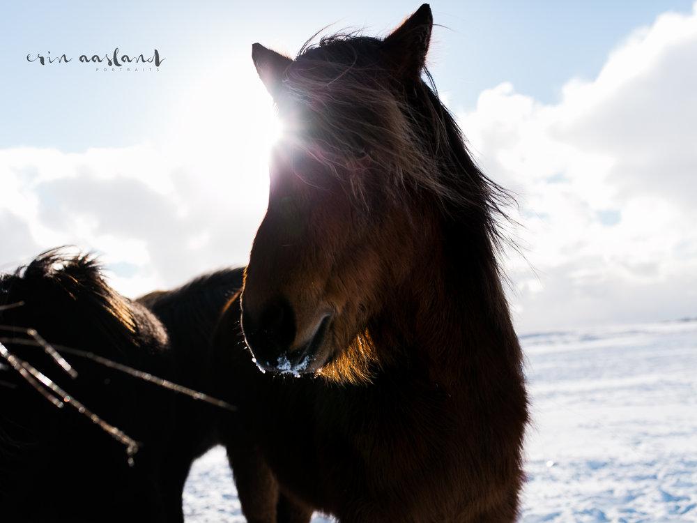 EAasland Iceland blog 24.jpg
