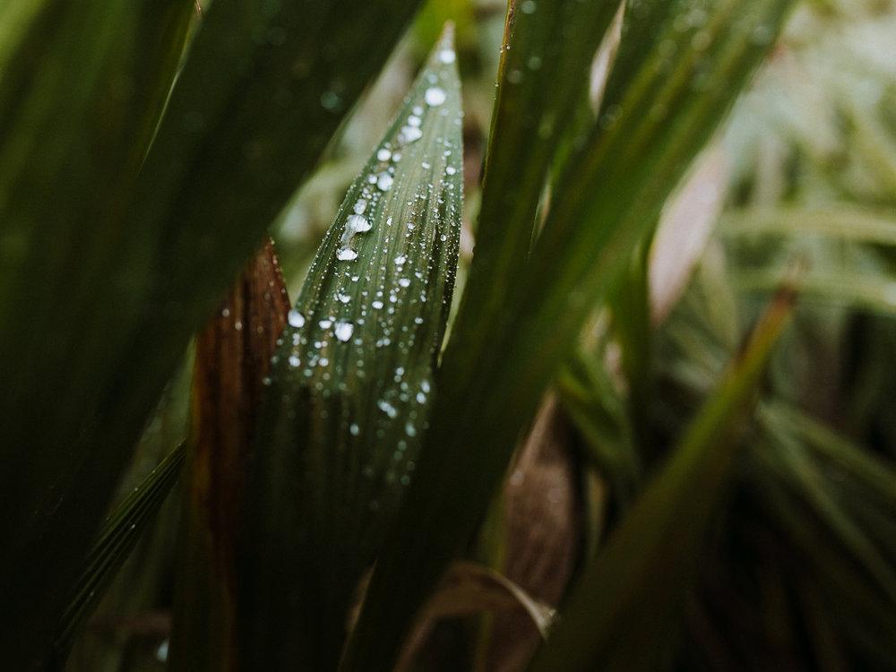 Erin Aasland Wedding Photographer Rain on leaves at Rosehilll