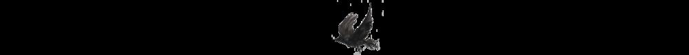 2018 logo line raven.png