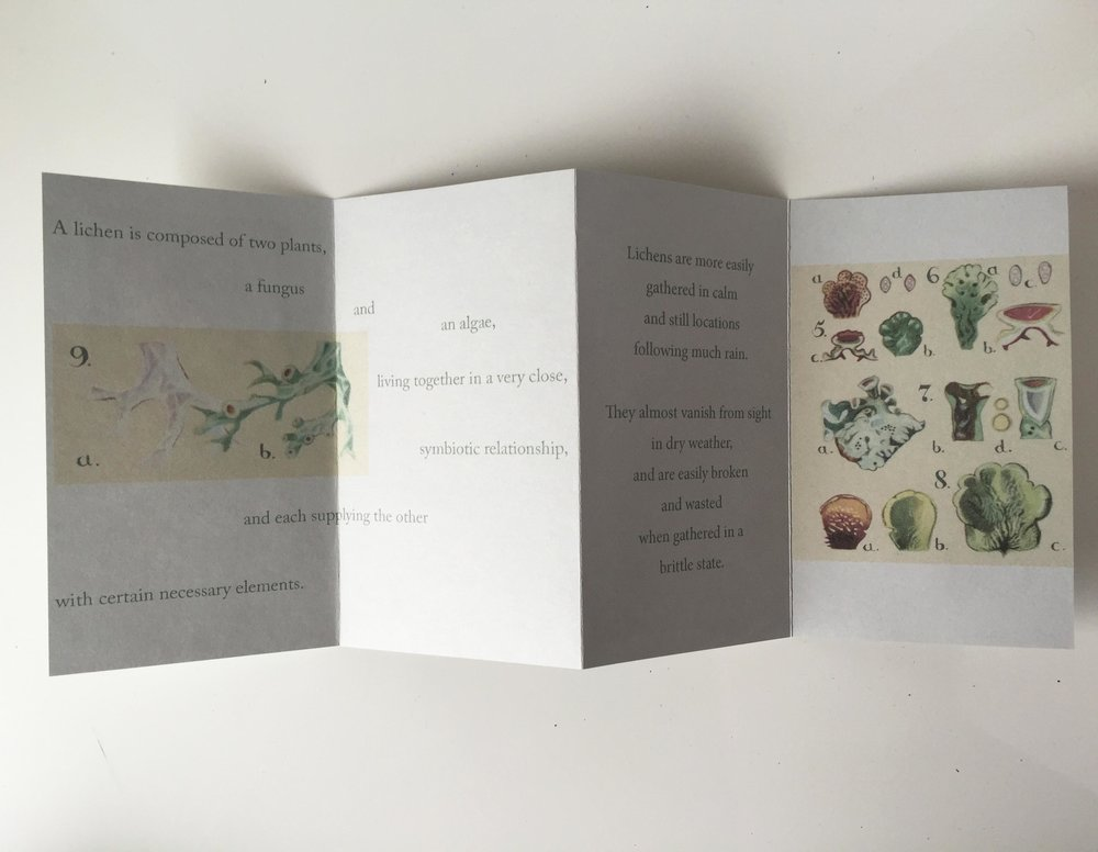 Text and images from Lichens for Vegetable Dyeing