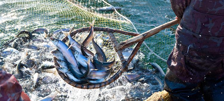 Tfn seafoods tla o qui aht first nation tfn board publicscrutiny Gallery