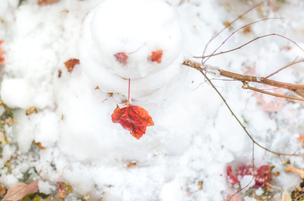 Nov 2015 Snow Day-BLOG-7280.jpg