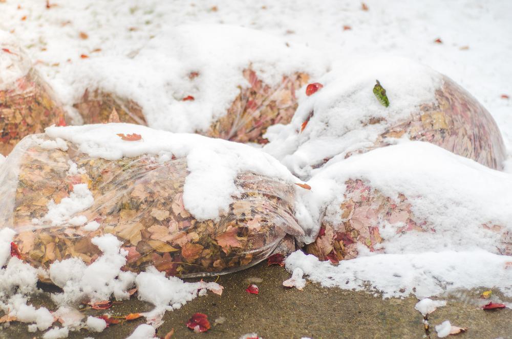 Nov 2015 Snow Day-BLOG-7288.jpg