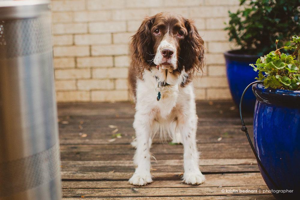 a pet that belongs to a fun family in Kingsgate.