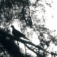 bird 4.jpg
