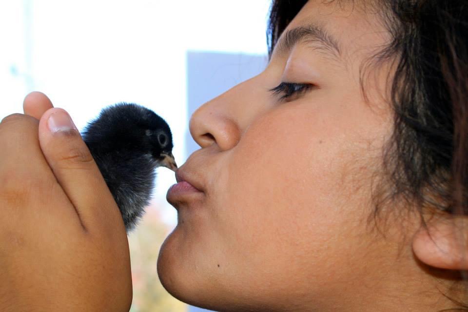 girl kisses chick.jpg