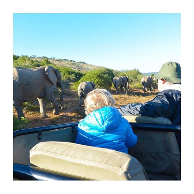 @family_lifestyle_mauritius enjoying a magical moment in the safari of Addo Elephant National Park. The elephants are so close- how incredible! 🐘