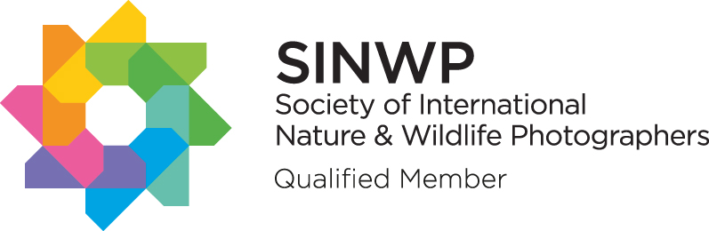 Successful Associate submission ASINWP (Society of International Nature & Wildlife Photographers)