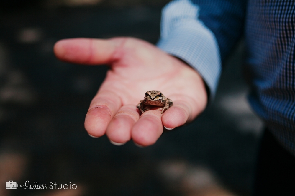 Bend, Oregon Lifestyle Wedding Photographer -  The Suitcase Studio - Engagement Photos at Dillon Falls - Deschutes Forest - Caught a Frog