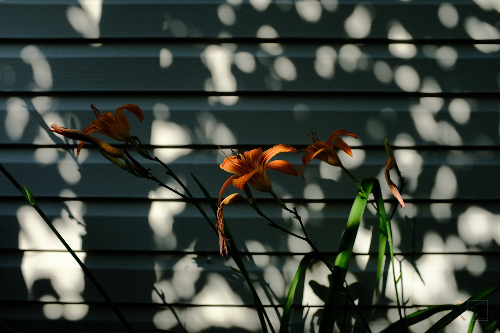 Sunday morning in the backyard 3/5