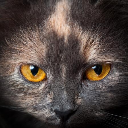 cat eyes.jpg