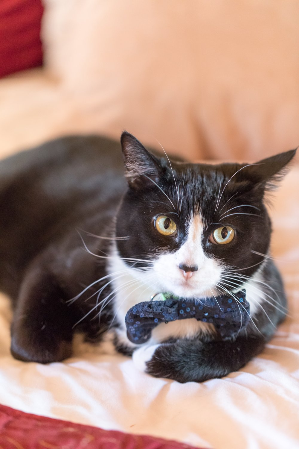 One of their two fur babies in a bow tie -- cute!