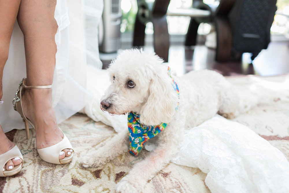 ! Fur Man Wedding Pic.jpg