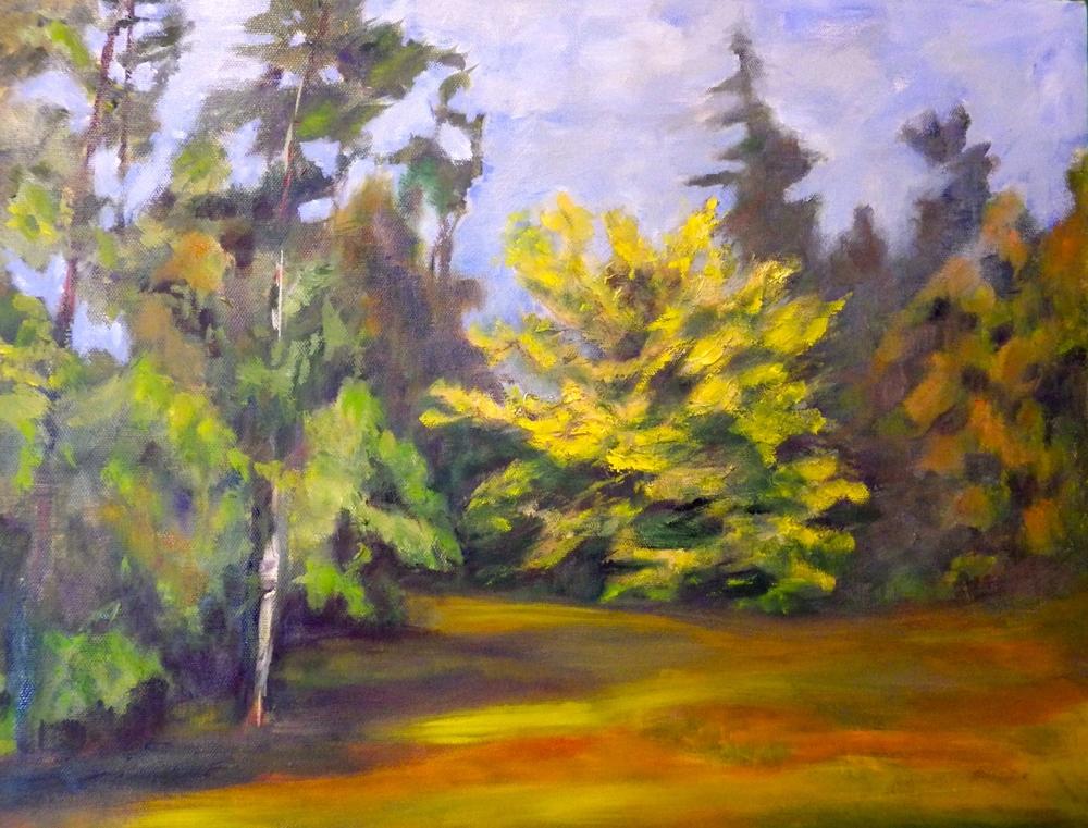 Wych Elm Redwood Park