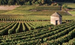 Burgundy-summer-small.jpg