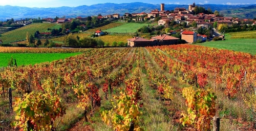 FR_Beaujolais Autumn Vineyard.jpg