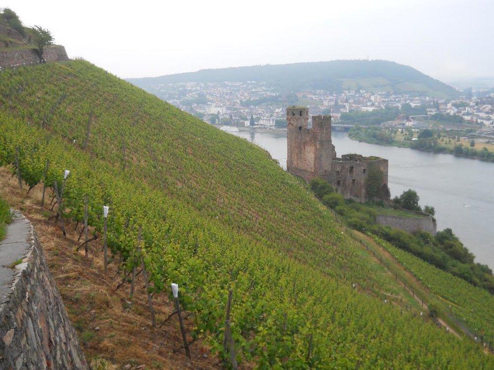 Riesling-Rheingau.jpg