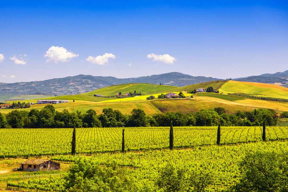 montalcino-countryside-vineyard-cypress-trees-and-PF4Y593.jpg