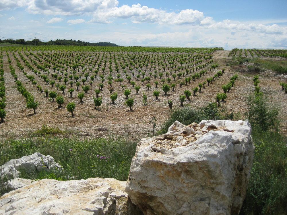 Languedoc 2.jpg