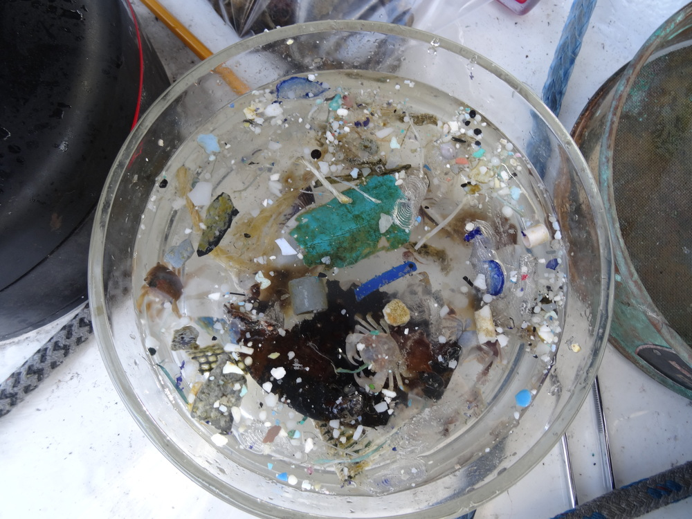 Plastic samples (and dead organisms) found from the Great Pacific Garbage Patch in the North Pacific Gyre.  (Courtesy of Lorena Rios Mendoza)
