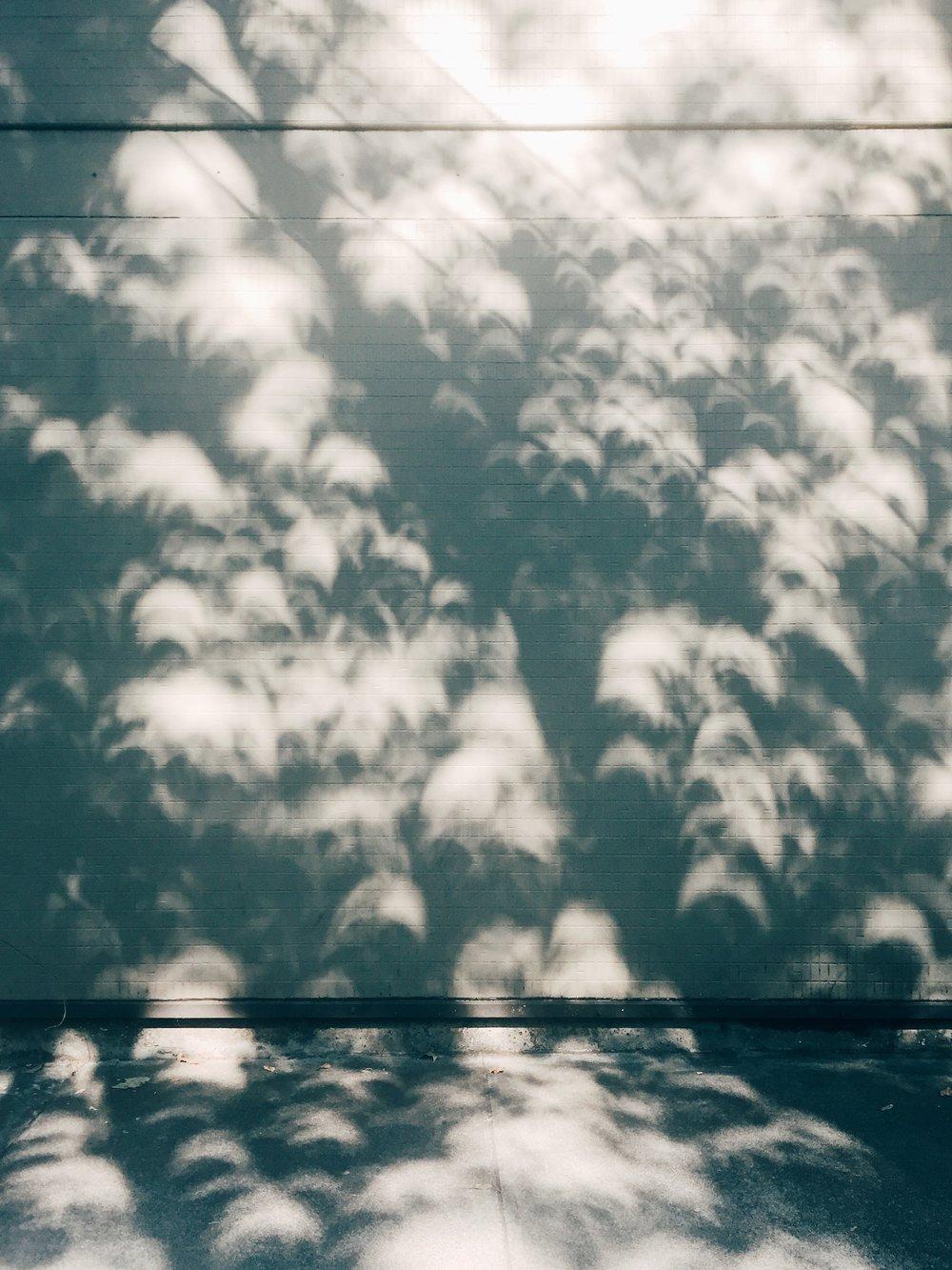 solar eclipse shadows / alex hood 2017