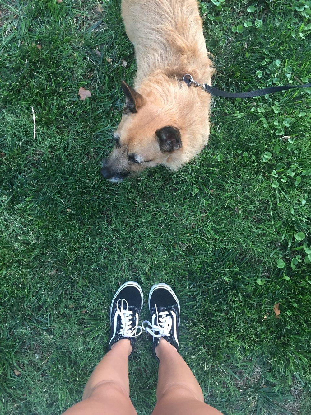vans and pups