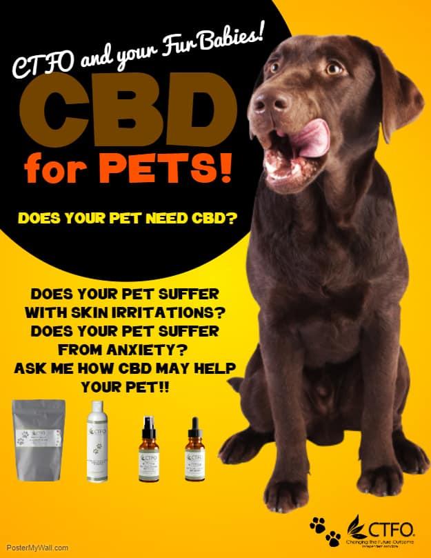 cbd-for-pets.jpg