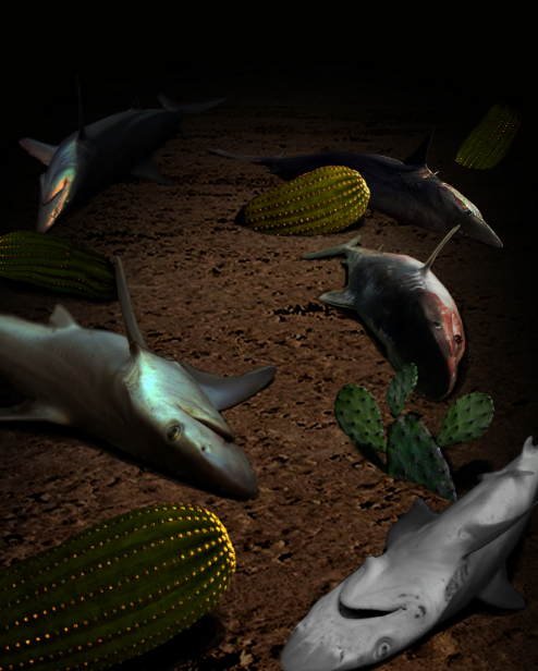 Sharks and Cacti.png