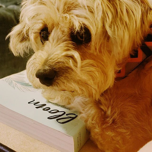 """Mom, stop reading and pet me"" #comics #graphicnovel  #bloom #dogstagram #bookstagram"
