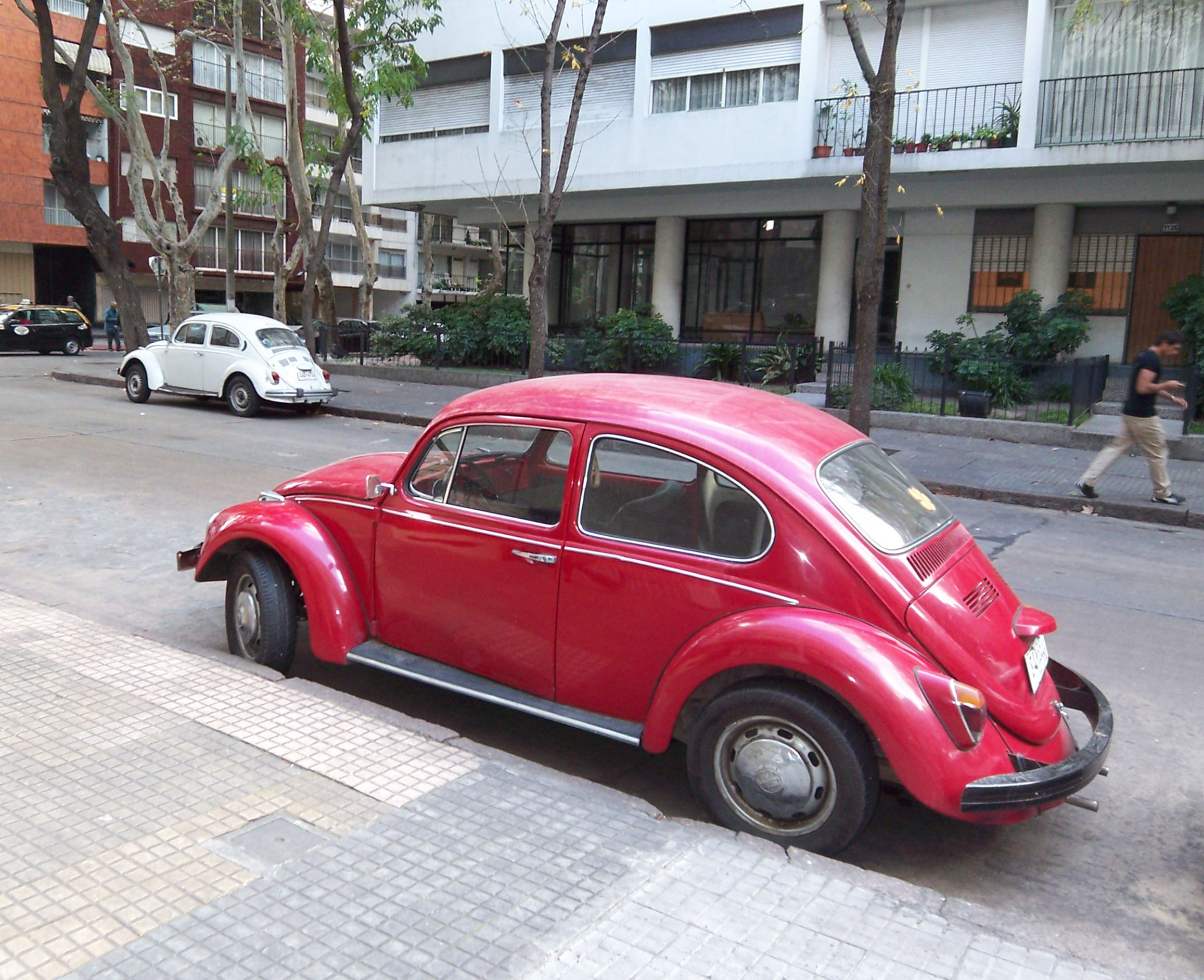 The VW Bug- A common sight in MVD