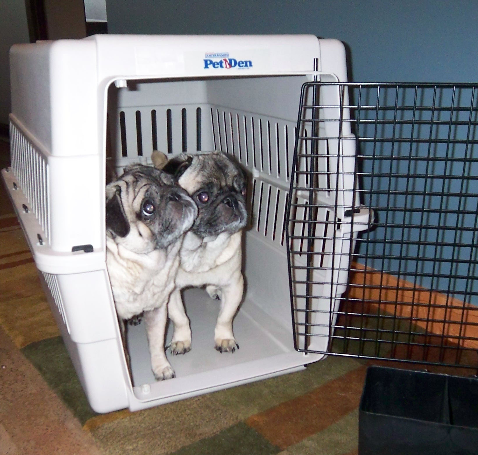 Can't we both just go in this big crate?