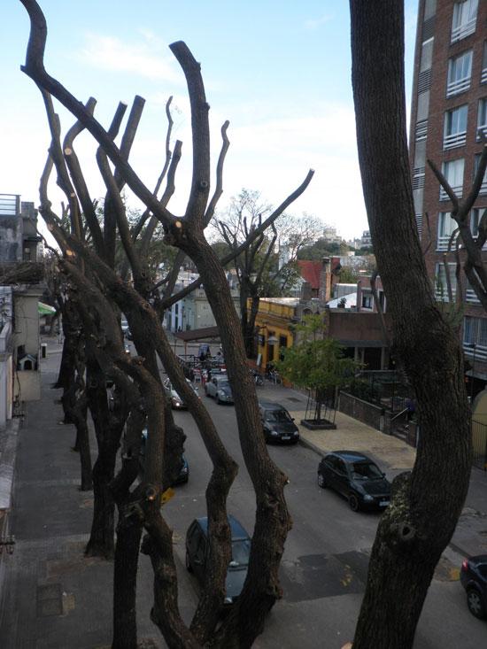 MVD Trees 2