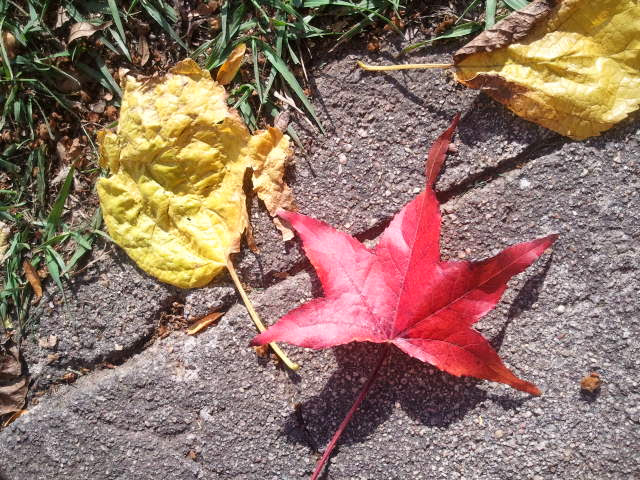 A 'perfect' leaf on my walk.