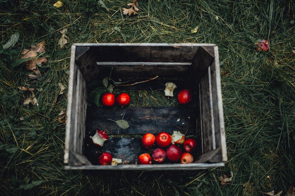 Fall Fun - Apple Picking - Elegant Farmer - Milwaukee - Emerald Tide Photography