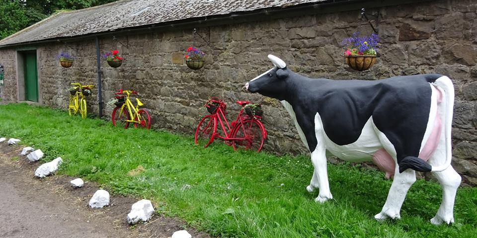 Doddington Dairy