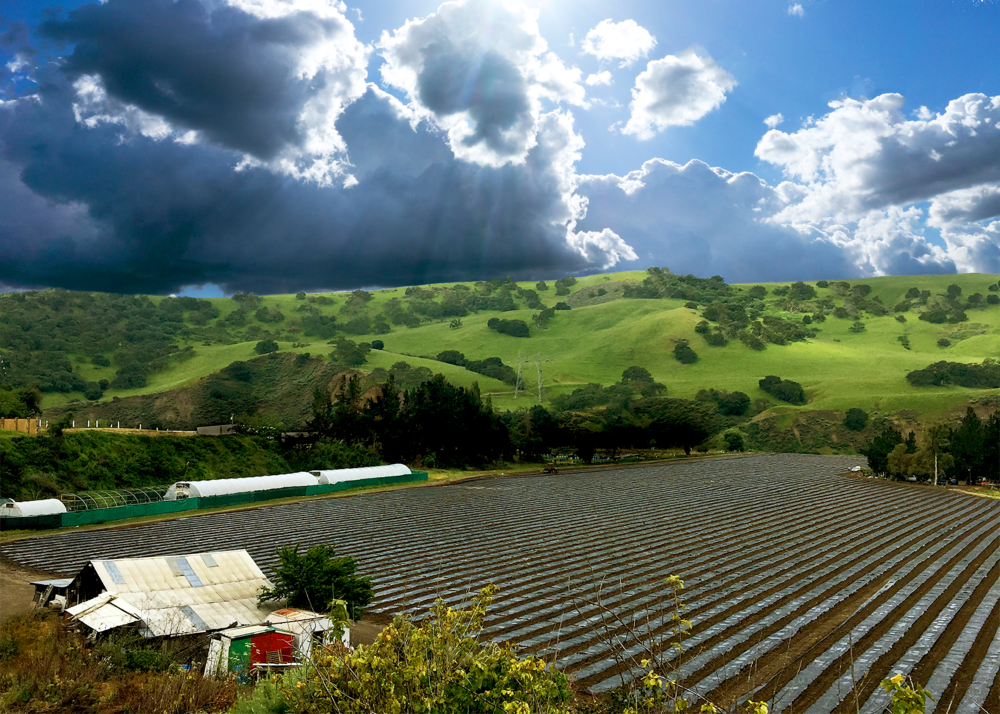 New Growth Organics is a friend & family-run farm in a bright, arid valley, amongst the rolling hills of San Benito County. -