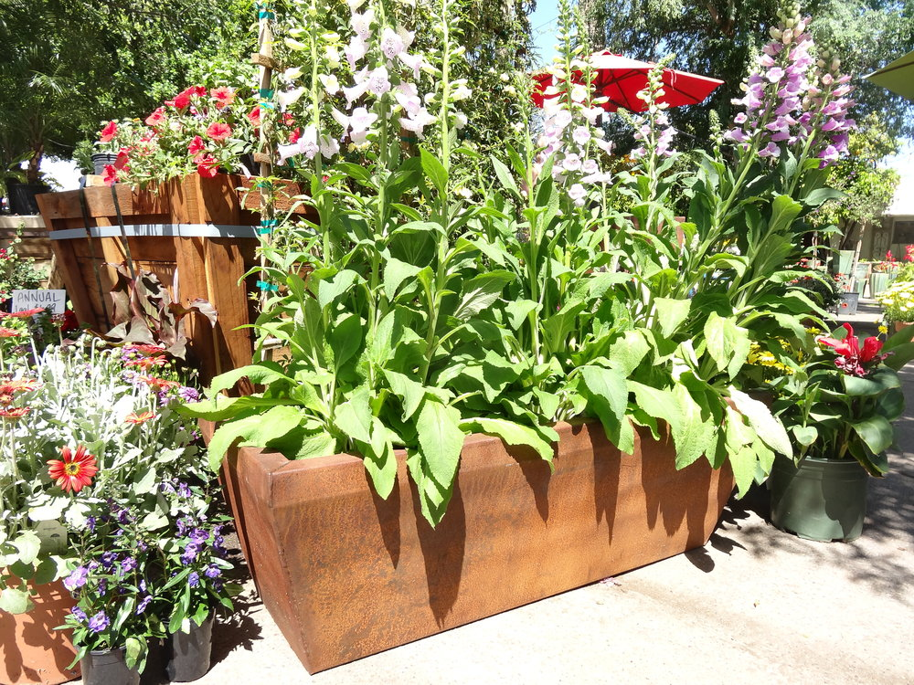 COR-TEN PLANTERS - Our featured landscape product, Cor-ten Planters, are a new line of planters made from cor-ten steel and available in three different styles: square, rectangular, and tall. Finishes include untreated steel (the steel will naturally patina into a rusted color), and clear-coated steel (to maintain the original look).