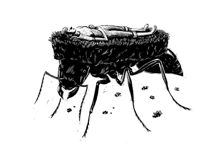 Pest Controll